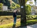 Vereador pede a criação de protocolo de cuidados com as árvores da cidade